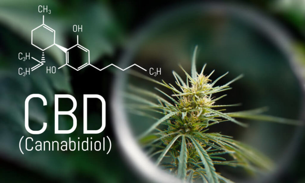 CBD Oil CBD Interest Surpasses Nearly All Other Health Products…