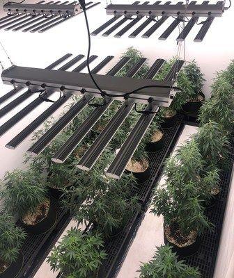 CBD Oil Agrozen Life Sciences Launches R&D Hemp Cultivation Center