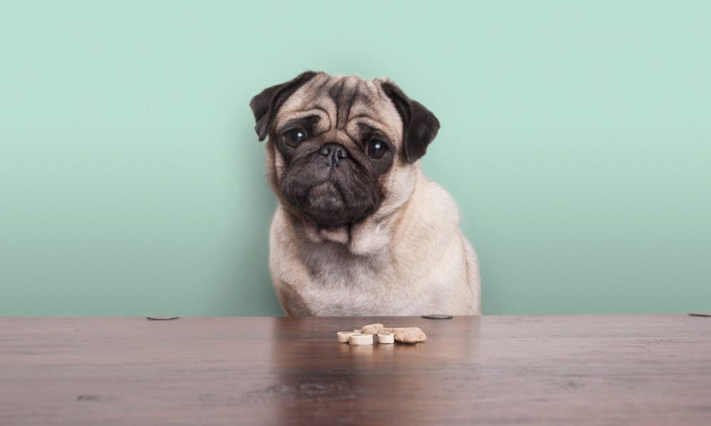 CBD Oil How to Choose the Best CBD Dog Treats for Anxiety