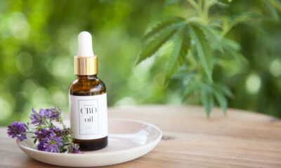 CBD Oil Why Is Everyone Talking About Charlotte's Web Stock?