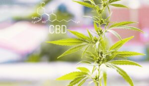 "CBD Oil The CBD ""Industry"" Is Here To Stay"