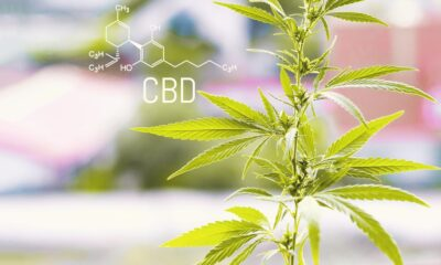 """CBD Oil The CBD """"Industry"""" Is Here To Stay"""