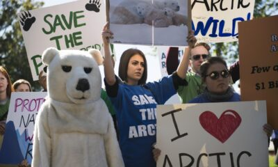 CBD Oil Trump Administration Makes ANWR A Political Football One More Time