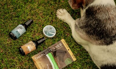 CBD Oil CBD Is Safe for Dogs. Here's Why You Should Be Taking Advantage.